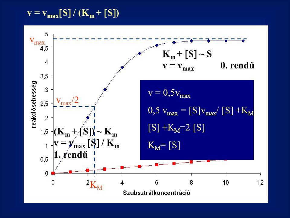 v = vmaxS / (Km + S) vmax. Km + S ~ S. v = vmax 0. rendű. v = 0,5vmax. 0,5 vmax = [S]vmax/ [S] +KM.